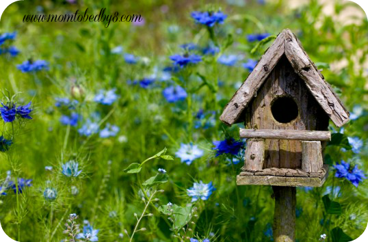 How to make your garden instantly cute motherhood defined for Different types of birdhouses