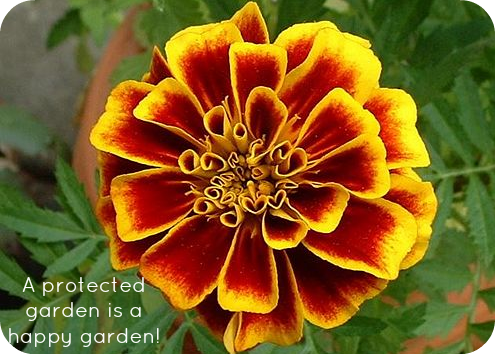 How To Protect Your Garden From Insects Animals Motherhood Defined