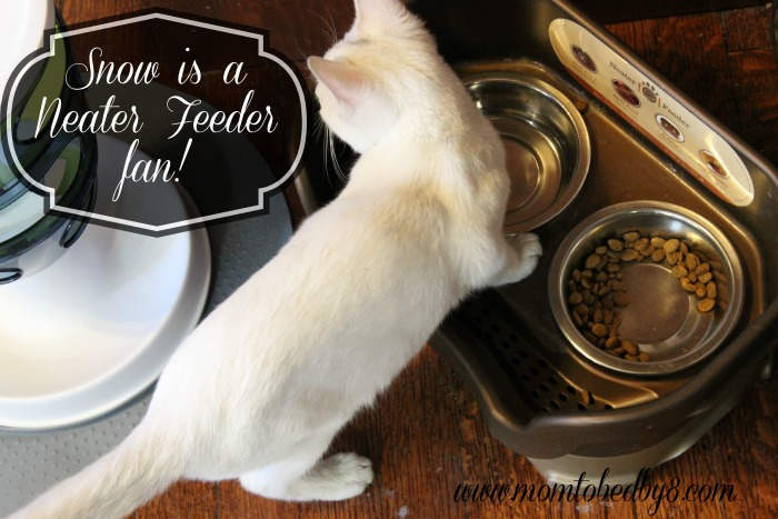 No More Feline Food Messes With The Cat Neater Feeder Review & Giveaway