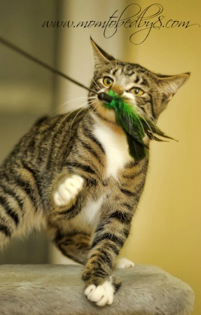 DIY: Create An Outdoor Jungle Cage For An Indoor Cat