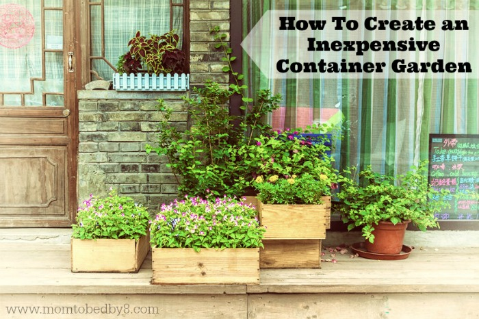 How To Create an Inexpensive Container Garden