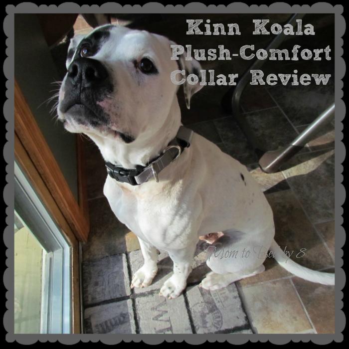 Kinn Koala Collar Review