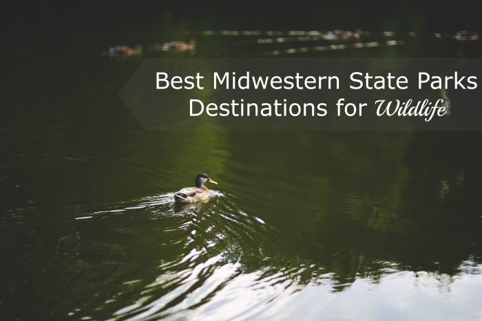 Best Midwestern State Parks Destinations for Wildlife