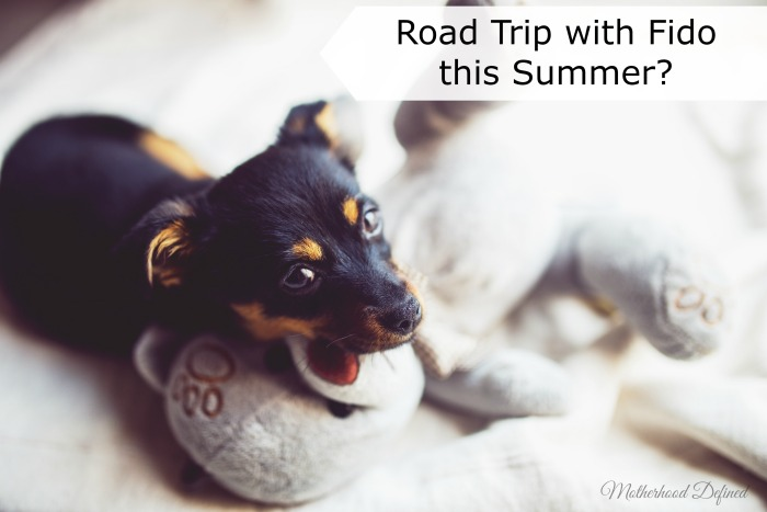 Road Trip with Fido this Summer?