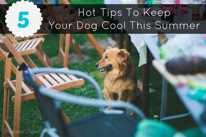 5 Hot Tips To Keep Your Dog Cool This Summer