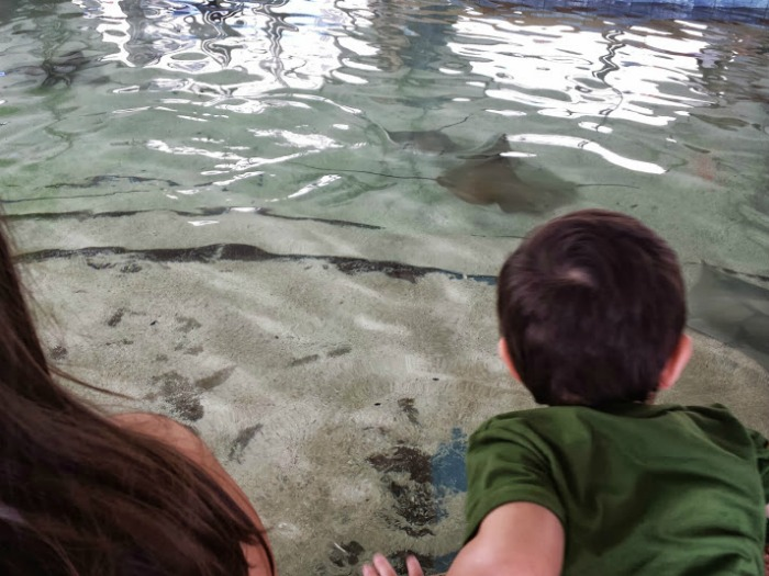 Weekend Getaway in Chicago ~ John G Shedd Aquarium
