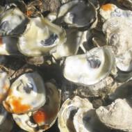 World's Largest Oyster Festival Returns to Charleston