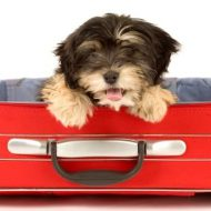Top Tips for Traveling with Pets