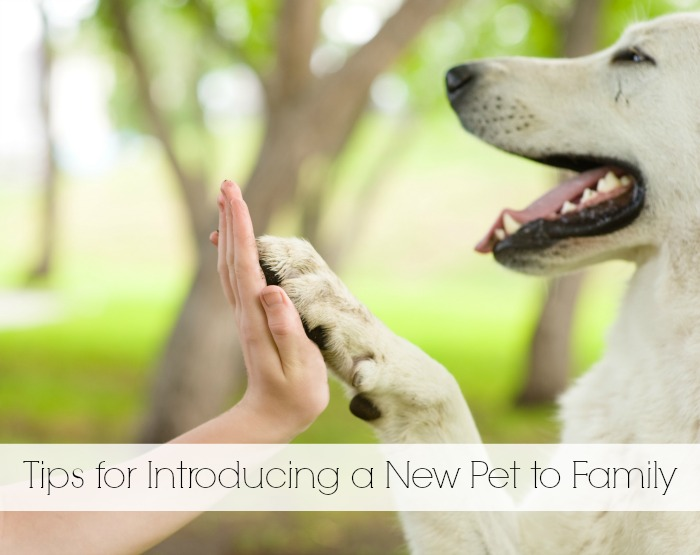 Tips for Introducing a New Pet to the Family