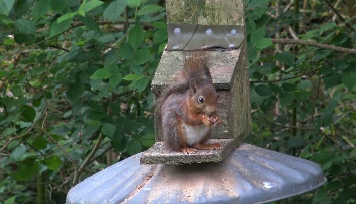 Garden Squirrel Photo