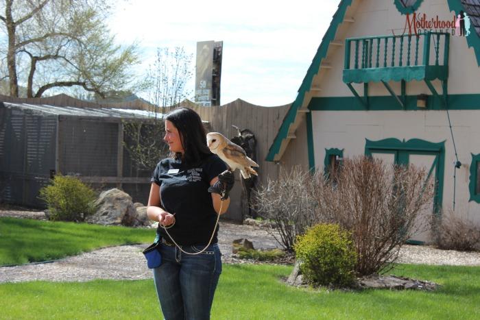 Reptile Gardens Bird Show European Barn Owl