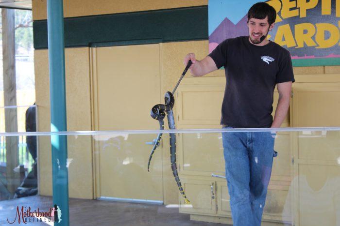 Reptile Gardens Snake Show