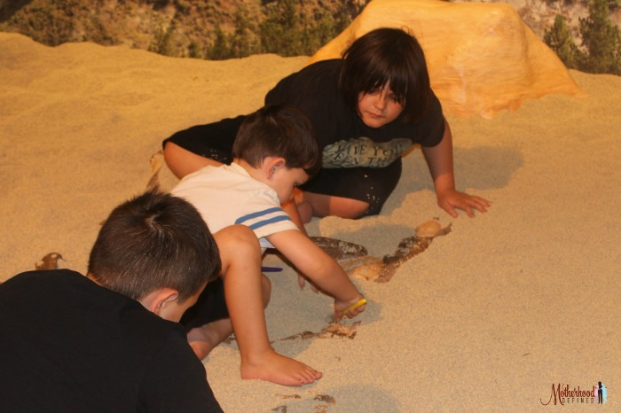 Sioux City Public Museum Dino Dig with MDefined