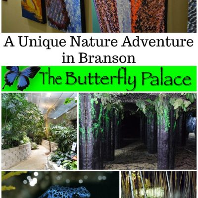 A Unique Nature Adventure in Branson, The Butterfly Palace & Rainforest Adventure