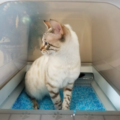 Santa Please Bring a PetSafe ScoopFree Ultra Self-Cleaning Litter Box for Christmas
