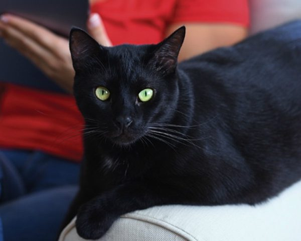 Your Cat's Scratch Has Met Its Match