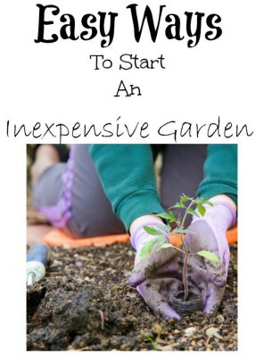 Easy Ways To Start An Inexpensive Garden