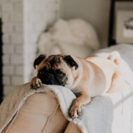 Top Places Fleas Love to Hide in Your Home