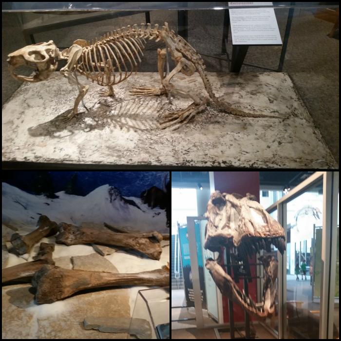 Dinosaur Hunt SMMN