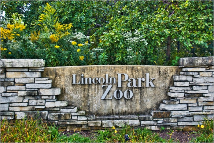 Weekend Getaway in Chicago ~ Lincoln Park Zoo