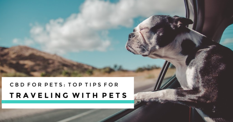 CBD for Pets: Top Tips for Traveling with Pets