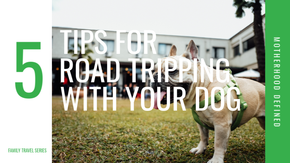 5 Tips for Road Tripping With Your Dog