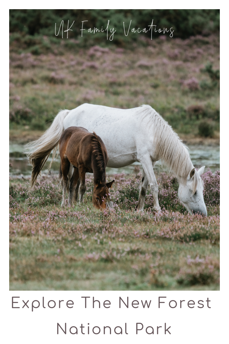 Explore The New Forest National Park