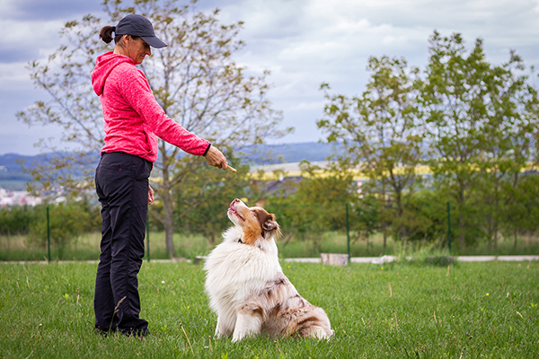 4 Tips to Train Your Pet - Be Patient, Start Slow