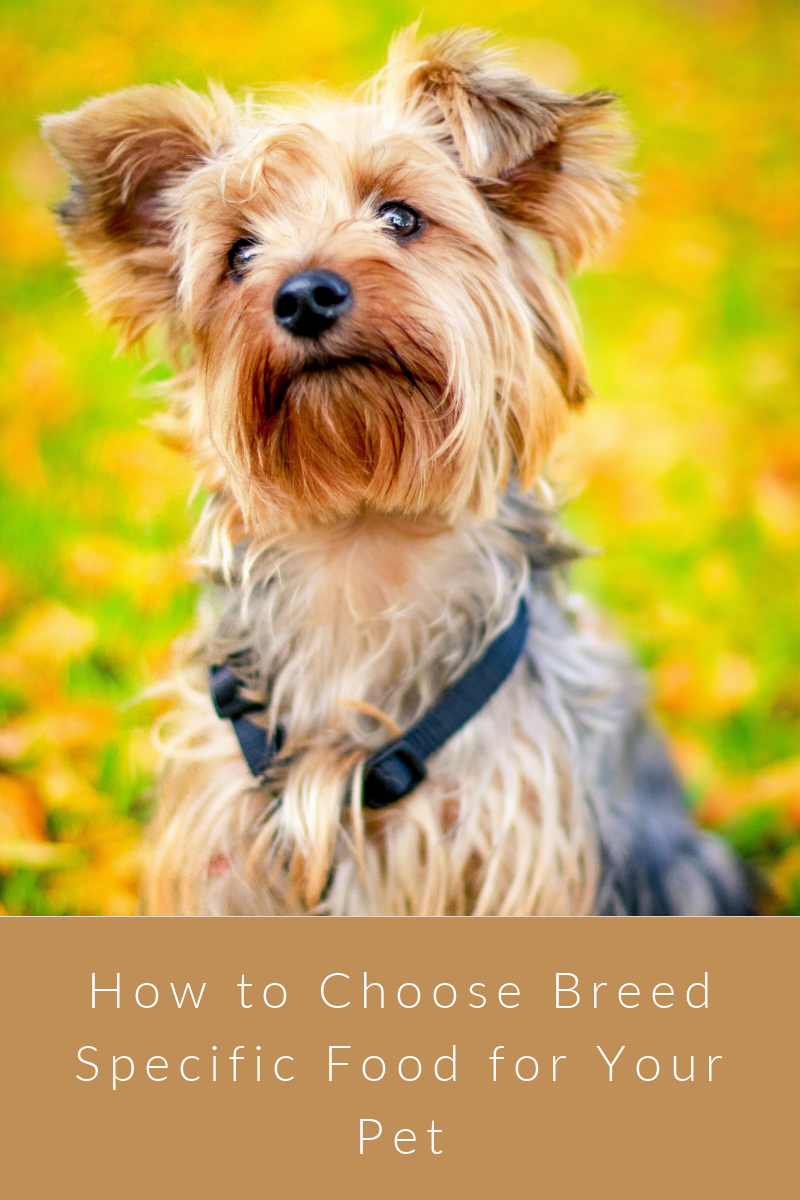 How to Choose Breed Specific Food for Your Pet