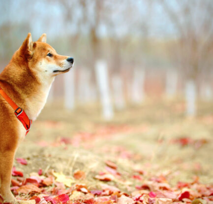 Going Beyond Sit, Stay, and Heel: Training Your Dog Needs to Have