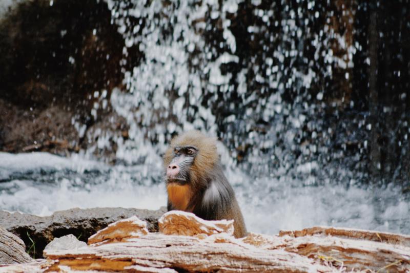 Family Friendly Activities In Dallas- Dallas Zoo