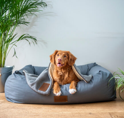 8 Supplies That Are a Sure Hit with Pet Parents