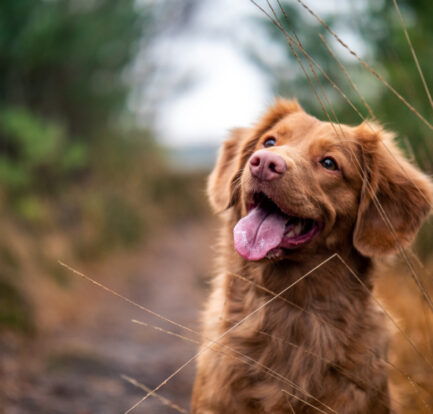Parent to a Restless Pet? Read this